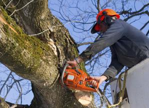 Landscaper Arborist Insurance South Jersey